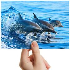 """Swimming Dolphins Sea Surf - Small Photograph 6"""" x 4"""" Art Print Photo Gift #8434"""