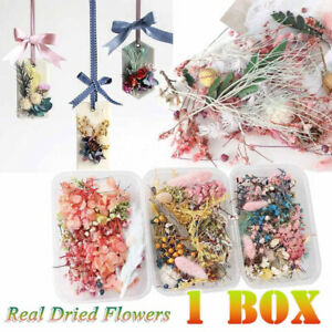 1 Box Dried Flower Plant For Candle Epoxy Resin DIY Jewelry Craft Accessories