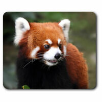 Computer Mouse Mat - Endangered Red Panda Office Gift #14159