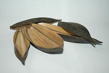 Pollywog Rainforest feuilles, 5 Pack ~ terrarium vivarium Dart Frog décor gecko