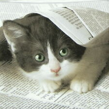 4x Paper Napkins for Decoupage Decopatch Craft Cat Good News