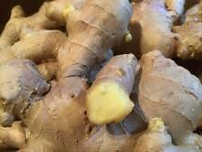 Fresh CERTIFIED ORGANIC Ginger Roots 500g  Free P+P (UK Seller)  Fiery & Juicy!