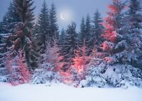 Snowy Night Forest Poster Print Size A4 / A3 Winter Nature Poster Gift #12424