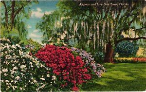 Vintage Postcard  - Azaleas And Live Oak Tress Linen Un-Posted Florida FL  #3927