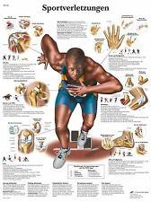 Sportverletzungen Lehrtafel  Anatomie 50 x 67cm Poster