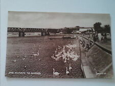 Postcard The Swannery  Weymouth Dorset  (A2)
