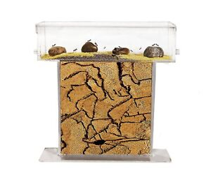 Ant Farm T with free Ants and Queen - Educational formicarium for LIVE ants …