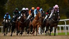 Betfair Betting Exchange Horse Racing System Subscription - 200+ Pts Profit P/M