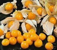 Garten Obst Samen exotische Zierpflanze selten ANDENBEERE