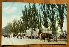 POSTCARD California Fruit Products CO Colton CA  U-2