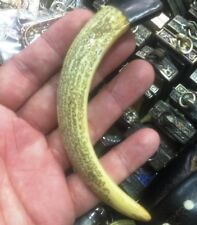 Real Pig Tooth Amulet Thai LP Sawai Holy Pendant Boar Hog Amulets Talisman