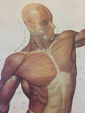 Oddities Vintage Anatomy Muscle Banner Screen