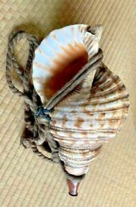 Horagai conch shell old Japanese antique Yamabushi Shugendo Samurai Shrine Japan