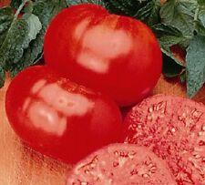 Beefsteak Heirloom Tomato-1 gram approx 250 seeds Bulk Size