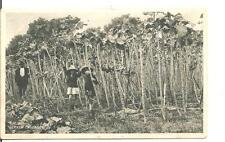 RARE,LOVELY VINTAGE POSTCARD,CHILDREN WITH JERSEY CABBAGE'S(10 FEET HIGH),1939