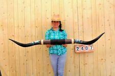 "STEER LONG HORNS MOUNTED 4' 11"" COW BULL SKULL TAXIDERMY LONGHORN LH2407"