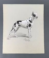 Original 1940's Illustration Art Great Dane Dog Drawing by Ted E. Schrock