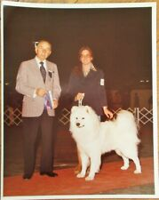 Samoyed 1977 Champion Dog Show 8 x 10 Photograph / Photo