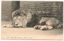 London Lion Single Collectable Animal Postcards