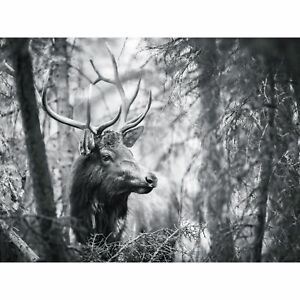 Deer Head Antlers Forest Large Canvas Wall Art Print