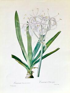 Botanical Print Reproduction, Redoute's Fairest Flowers, American Crinum, 1989