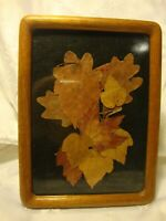 """Rare Real Leaf Pressed Art in 5"""" x 7"""" Picture Photo Frame Home Decor     282"""