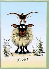 "Mark Denman sheep  greeting card "" Duck ""  blank inside"