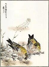 2 Japanese Woodblock Reproductions:Kashu: Greenfinch & Snipe - 2 Fine Art Prints