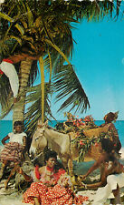 s16727 Colourful natives picking coconuts, Jamaica postcard *COMBINED SHIPPING*