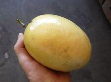 10 YELLOW PASSION FRUIT SEEDS,PASSIFLORA EDULIS FLAVICARPA ,Jamaican Sweet cup