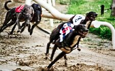 @@@***Win Money With The Incredible FIND-THE-DOG Greyhound Betting System****@@@