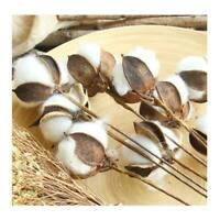 5 Dried Heavenly Bamboo Seed Stems for DIY Craft