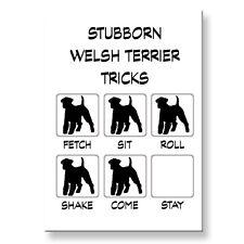 Welsh Terrier Stubborn Tricks Fridge Magnet Steel Case Funny