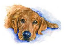 artav Golden Retriever 01 Art Print of Watercolor Pain