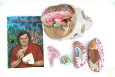 Educational 8-piece Model Brain kit in Aluminium Case + 28 page Colour Booklet