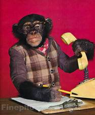 1959 MONKEY HUMOR Chimpanzee BUSINESS Telephone Communication Boss Animal Photo