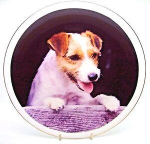 ~ Rough Coat Jack Russell ~ Bone China Dog Plate