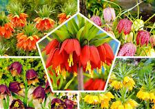 10 Fritillaria Flower Seeds Mixed The Emperor Crown Bonsai Plant in Home Garden