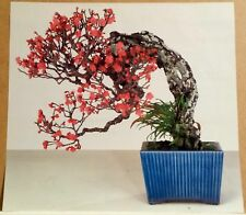 Bonsai Flowering Cherry Art Photographic Color Print Poster