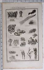 1788 ORIGINAL PRINT BOTANY MOSSES BYSSI CORALLOIDES SPHAGNUM LICHENOIDES