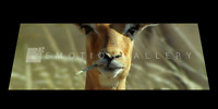 IMPALA 3D MOTION  BOOKMARK  BY EMOTION GALLERY- BM-027