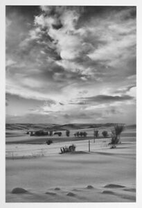 """Landscape Photography Log Jam Skagit Bay WA Black and White Picture 11 X 14/"""""""