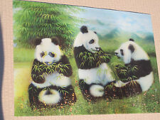 3D Picture of 3 Giant Panda Bears eating Bamboo