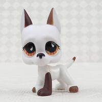 Details about  /Pet Shop Great Dane Dog LPS #817 Brown Cream Blue Star Eyes Rare Puppy