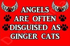 Angels Are Often Disguised As Ginger Cats Fridge Magnet Gift/Present Kitten