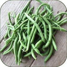 Organic, Bush Blue Lake 274 Green Bean,100ct Heirloom Non-GMO US Grown 2017