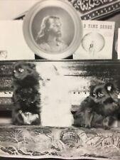 New Listingx9 Vintage Pomeranian Dog Photos Black White Posing Pets Snapshots