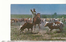 Roping A Calf     Unused Chrome Postcard 1517
