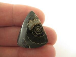 Marston Marble Cabochon - U.K Ammonite specimens. Beautiful stone - Rare