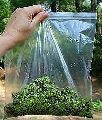 Duckweed 2lbs  Great All Natural Fish Food 100% Bio Filter